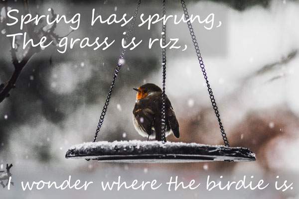 Spring has sprung, the grass has riz, I wonder where the birdie is.  Old saying, it's springtime, so why is it so cold?!!